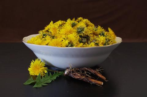 Dandelion Root Weight Loss