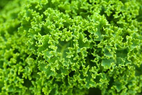 Kale Weight Loss